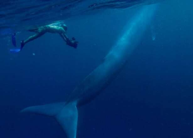blue - whale - loud - sound - hearing - aids - loss